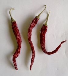 Chilli large red